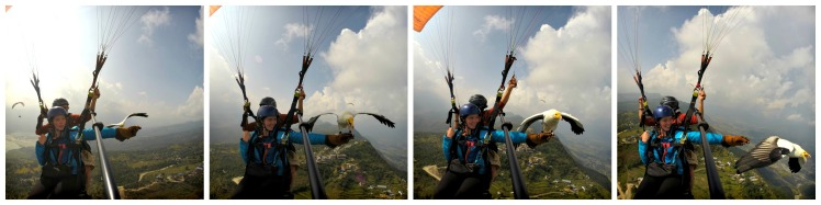 Parahawking Collage